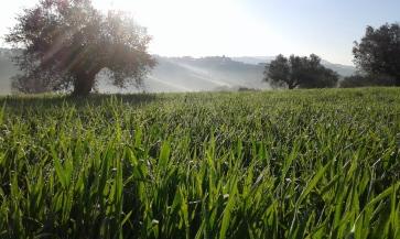 Abruzzo_0160411_073508