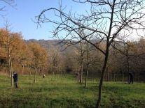 No Man's Land, alberti di noce e studenti - Loreto Aprutino (PE) - ph. Gino Di Paolo - www.fondazionearia.it