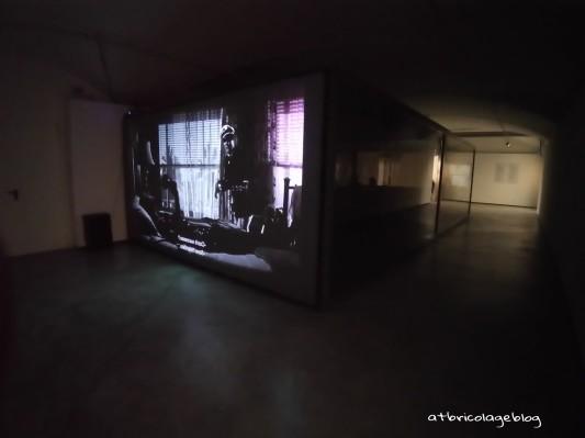 Carsten Höller - Stefano Mancuso, The Florence Experiment a cura di Alberto Galasino (dettaglio), Palazzo Strozzi, Firenze, maggio 2018 - ph. Amalia Temperini