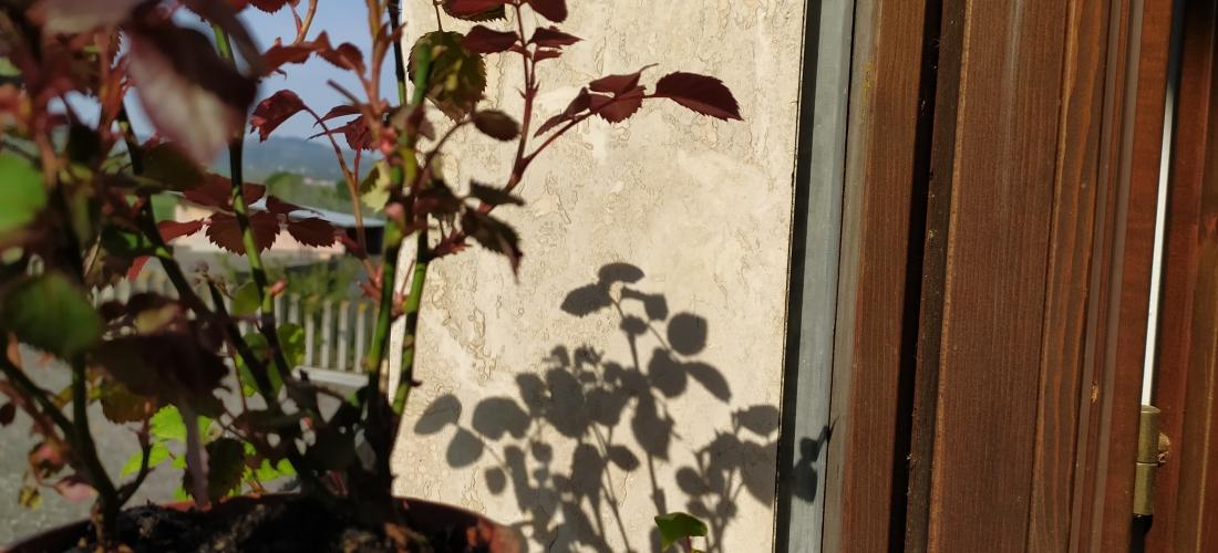 fiori al balcone - ph. Amalia Temperini