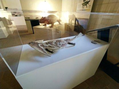 Extinction - Dinosauri in carne e ossa #Gubbio, Monastero di San Benedetto
