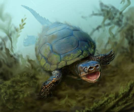 tartaruga naso di porco